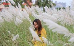 Mê mẩn mùa lau trắng ở Đà Nẵng