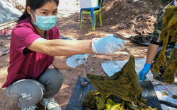 Thái Lan: Đến các công viên quốc gia phải mang theo túi đựng rác