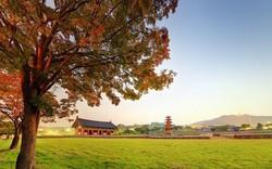 Khám phá khu di tích lịch sử Baekje- di sản thế giới Hàn Quốc tại Hà Nội