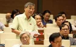 Đại biểu Quốc hội lo người dân không đủ thịt lợn ăn vào dịp Tết Nguyên Đán