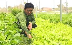 """Kon Tum: Rau VietGap """"đói""""… thị trường"""