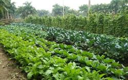 Tổ chức, cá nhân buôn bán giống cây trồng phải có hồ sơ bảo đảm truy xuất nguồn gốc
