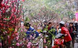 Hà Nội tổ chức 51 điểm chợ hoa xuân phục vụ Tết Nguyên đán