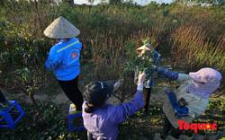Người dân làng đào Nhật Tân tất bật tuốt lá, chuẩn bị cho Tết Nguyên đán