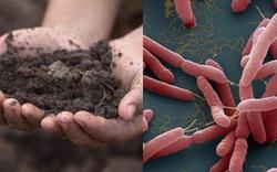 Vụ 2 anh ruột trong một gia đình tử vong: Phát hiện mẫu đất có chứa vi khuẩn Whitmore