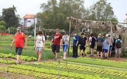 Hội An sẽ chào đón vị khách quốc tế đầu tiên tới tham quan thành phố tại Làng rau Trà Quế