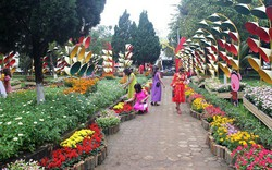 Quảng Ngãi: Khai mạc trưng bày hoa, cây cảnh Xuân Kỷ Hợi