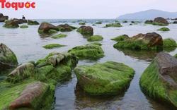 Đẹp ngỡ ngàng mùa rêu xanh tại rạn Nam Ô