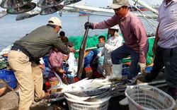 Quảng Trị: Ngư dân trúng đậm mẻ cá hơn 7 tỷ đồng ngày đầu năm