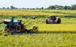 Năm 2019, xuất khẩu gạo sang thị trường lớn Trung Quốc sẽ gặp rất nhiều thách thức