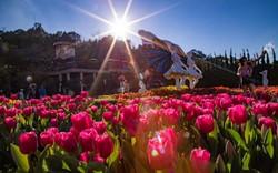 Lễ hội hoa tulip tại Bà Nà được trao kỷ lục Guinness Việt Nam
