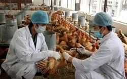 Hai trường hợp nhiễm cúm gia cầm H5N1 trong dịp Tết Nguyên Đán