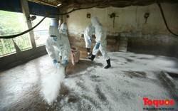 Người đứng đầu các địa phương sẽ phải chịu trách nhiệm về kết quả phòng, chống bệnh dịch tả lợn Châu Phi tại nơi mình quản lý