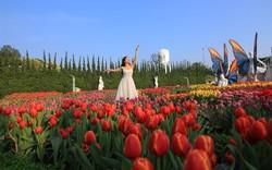 Phiêu lưu trong xứ sở hoa tulip diệu kỳ ngay tại Việt Nam- giấc mơ có thật