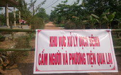 Tiêu hủy lợn rừng nghi bị dịch tả lợn Châu Phi trong khu nghỉ dưỡng