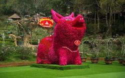Ngắm chú lợn được làm từ gần 11 nghìn bông hồng nhận Kỷ lục Việt Nam
