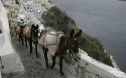 Thiên đường Santorini: Du khách