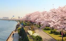 Từ 28/4 - 2/5, sẽ có chuyến bay charter từ Việt Nam tới Nhật Bản