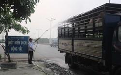 Quảng Nam triển khai quyết liệt các biện pháp phòng, chống dịch tả lợn châu Phi