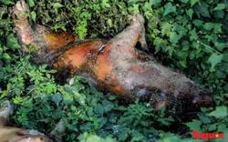 Xác động vật phân hủy, thối rữa cùng rác thải công nghiệp vứt bừa bãi bên Đại lộ Thăng Long