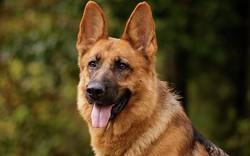 Nếu đã và đang có ý định nuôi chó, bạn chắc chắn phải đọc câu chuyện này