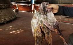 Phương thức xuất khẩu thay đổi, hàng trăm tấn mực khô của ngư dân Quảng Nam
