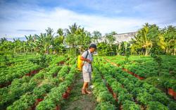 Phát triển nhận thức về du lịch nông thôn thông qua xây dựng mô hình Làng Văn hóa du lịch