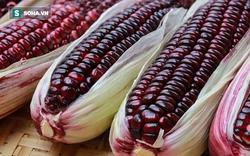 30.000 đồng một bắp ngô đỏ có thể ăn sống