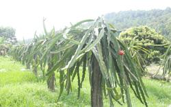 Tiếp tục đổi mới, nâng cao hiệu quả kinh tế tập thể trong lĩnh vực phi nông nghiệp
