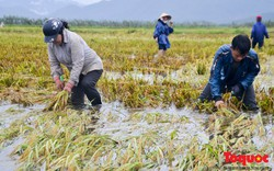 Lo lũ, người dân Thừa Thiên Huế tất tả ra đồng
