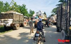 Xe tải xếp hàng dài, người dân vật vã chờ được thu mua sắn sau lũ