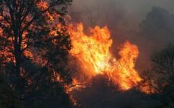Di sản thế giới bị thiêu rụi trong cháy rừng ở Australia