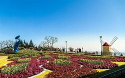 Du xuân cực chất tại thiên đường hoa tulip Sun World Ba Na Hills