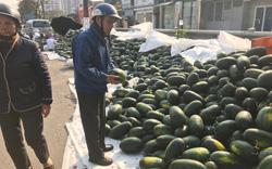 Nông sản Việt đi Trung Quốc