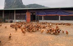 """Vốn vay giải quyết việc làm theo Nghị định 74: """"Cứu cánh"""" cho người nghèo tỉnh Sơn La"""