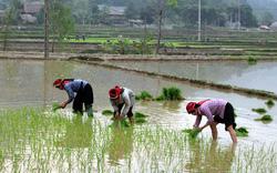 Thủ tướng đồng ý cho Hà Giang chuyển đổi hơn 61 ha đất trồng lúa
