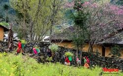 Lên Hà Giang ngắm hoa đào, hoa mận nở muộn trên cao nguyên đá