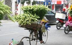 Đầu mùa, hoa loa kèn xuống phố với giá rẻ bất ngờ, là cơ hội để chị em mua số lượng nhiều về nhà cắm chơi