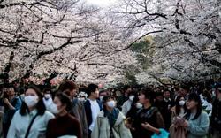 Nhật Bản rộn ràng đón hoa anh đào bất chấp Covid-19