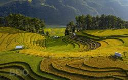 Nghệ sĩ Nhiếp ảnh Việt Nam đoạt Huy chương Vàng FIAP