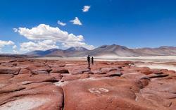 Trăm hoa đua sắc trên sa mạc khô cằn nhất thế giới