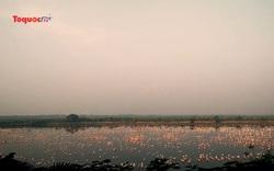 Ngoạn mục hàng nghìn hồng hạc đổ bộ