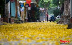 Hà Nội mùa lá sấu trải vàng từng con phố