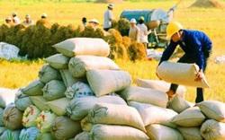 Chưa đến 30 giây, hơn 65.700 tấn gạo được doanh nghiệp mở xong tờ khai xuất khẩu
