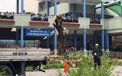 Các địa phương rà soát cây xanh, đảm bảo an toàn trường học