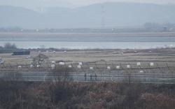 Hàn Quốc thông tin về vụ nổ súng tại biên giới liên Triều