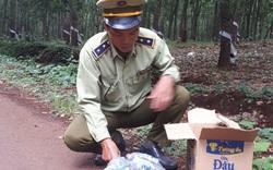 Đội QLTT số 5 phát hiện, tạm giữ 1,7kg pháo nổ tại Bình Phước