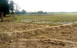 Thủ tướng đồng ý chuyển đổi mục đích sử dụng đất trồng lúa tại Hải Dương và Hà Nam