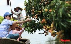 Trốn nóng Thủ đô, về Thanh Hà lên ghe thuyền đi hái vải