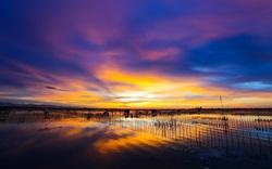Chính thức thành lập Khu bảo tồn thiên nhiên đất ngập nước Tam Giang – Cầu Hai